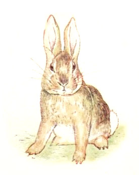 The Tale of the Fierce Bad Rabbit