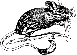 mouse-153452_640